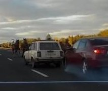 Hazardous horse herd causes crash on stretch of highway