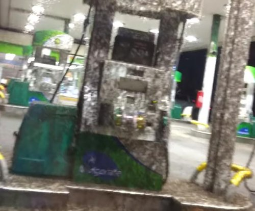 Woman finds gas station swarming with mayflies