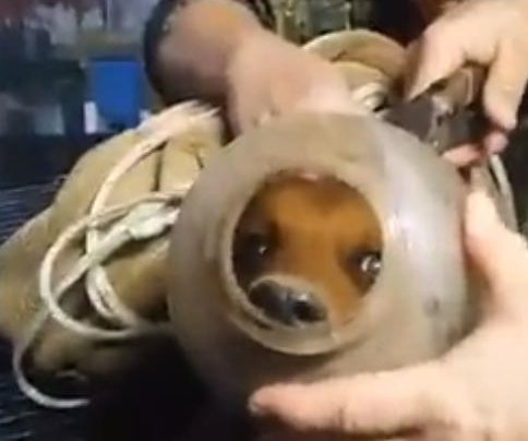 Houston family rescues dog stuck in jug for months
