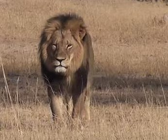 Second American hunter accused of killing of Zimbabwe lion; Jericho confirmed alive