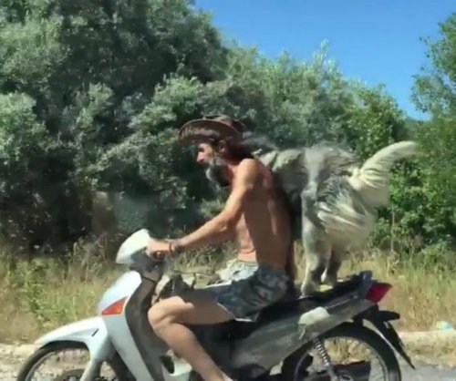 Dog balances on the back of moving moped in Greece