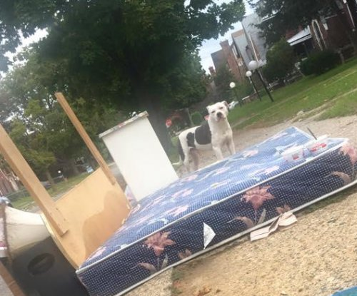 Abandoned Detroit dog waits for owner for a month on discarded mattress
