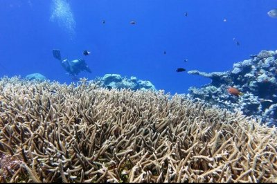 Coral triage: Scientists zero in on reefs with best chance of survival