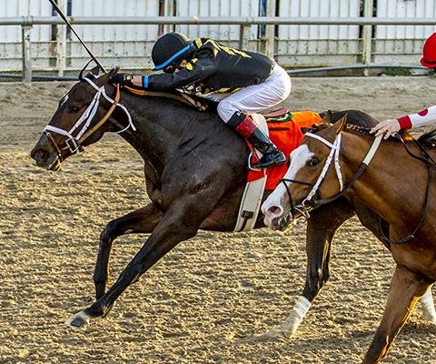 UPI Horse Racing Roundup: Kentucky Derby slots locked up in Louisiana, Japan