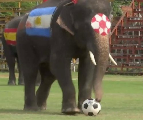 Elephants play soccer to discourage World Cup gambling