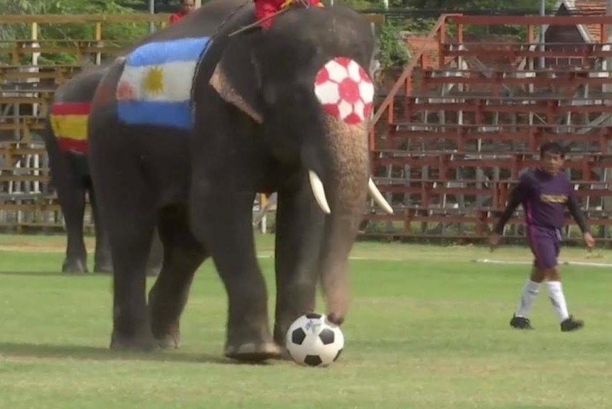 ნახეთ როგორ თამაშობენ სპილოები ფეხბურთს - ვიდეო, რომელმაც ინტერნეტსივრცე დაიპყრო