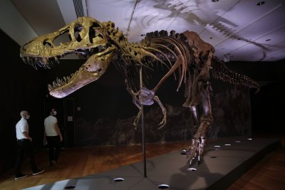 Teenage tyrannosaurs, 'megatheropods' limited diversity of smaller dinos