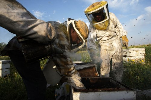 40,000 bees removed from Pennsylvania Turnpike toll booth