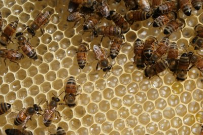 Bees get better at math when they're punished for mistakes