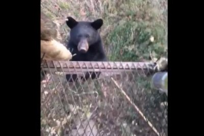 Bear joins Mississippi hunters in tree stand