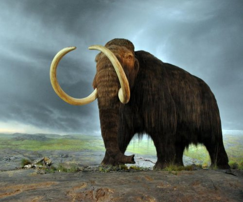 Woolly mammoth nuclei come alive inside mouse cells