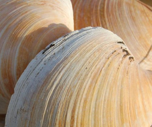 Quahog clam offers 1,000-year history of oceanic climate change