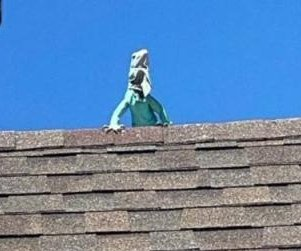 Stray iguana spotted sunning itself on Colorado rooftop