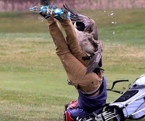 Goose attacks high school golfer in Michigan