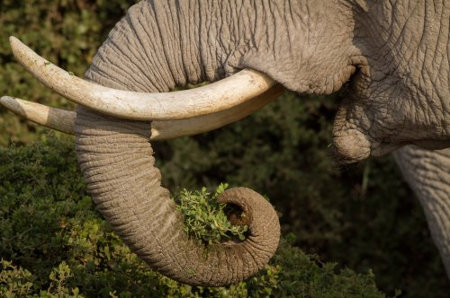 At least 200 elephant deaths blamed on Zimbabwe drought