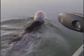 Watch:-Family-rescues-swimming-bear-with-plastic-jug-stuck-over-its-head