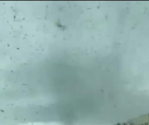 'Pillars' of mosquitoes fill the sky in Russian driver's video
