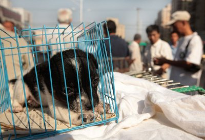 Groups vow to support anti-puppy mill law