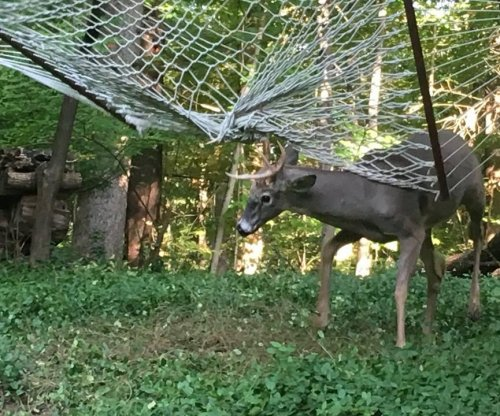 Deer trapped in hammock rescued in Indiana