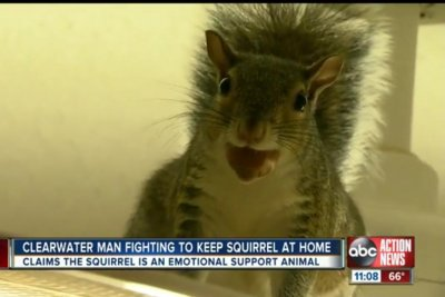 Florida man fights to keep emotional support squirrel