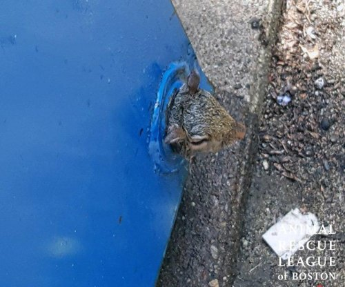 Boston rescue crews save squirrel trapped at bottom of dumpster