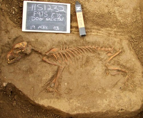 America's first dogs came from Siberia, disappeared after Europeans arrived