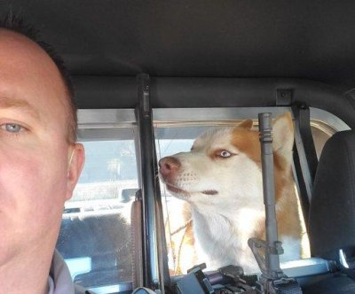 Loose dogs rescued on Las Vegas highway