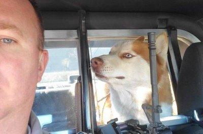 Loose dogs rescued on Las Vegas highway