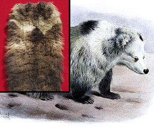 Bear skin from Yeti hunt sells for $21,600