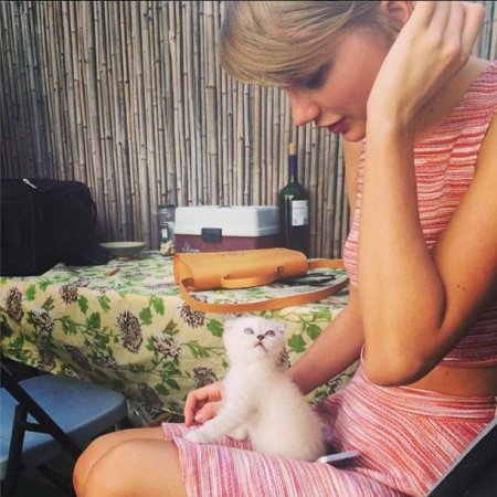 Taylor Swift introduces her new cat Olivia Benson on Instagram
