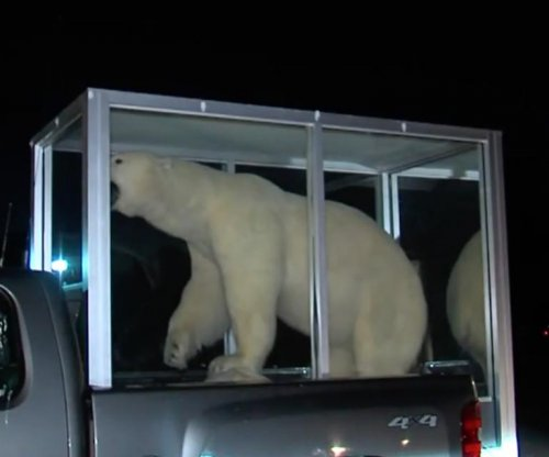 Taxidermy polar bear confiscated at Oklahoma airport