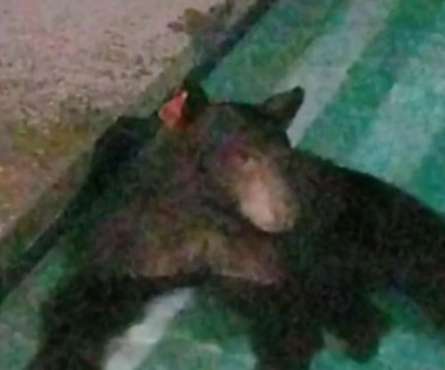 Bear takes nighttime dip in California pool