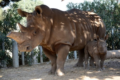 Zookeeper hospitalized with injuries from rhino