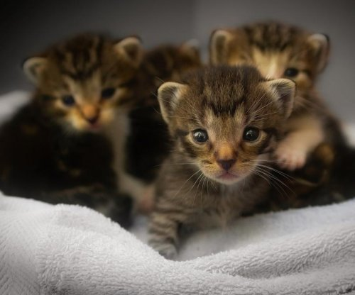 Six orphaned kittens rescued from storm drain in New York
