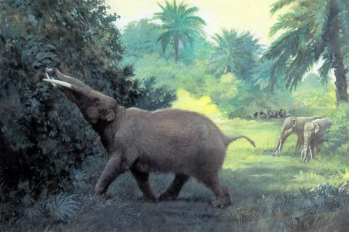 Ancient man hunted elephants' ancestors
