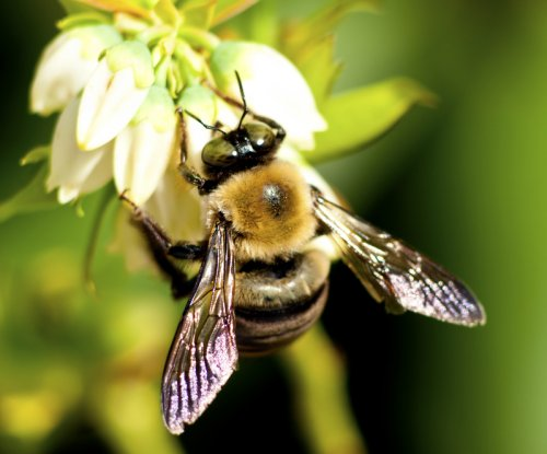 Study: Ongoing bee decline could exacerbate malnutrition