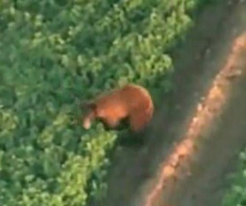 Bear wanders Phoenix suburb, eludes authorities