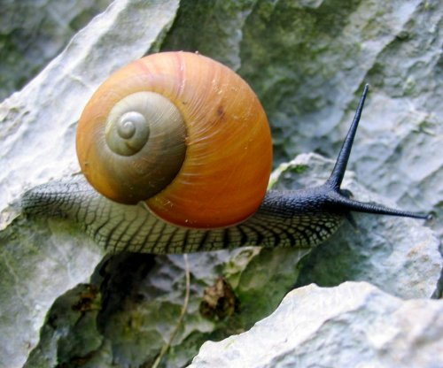 Parasite colonizing Florida snails could pose health risk
