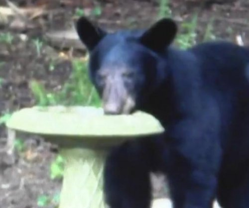 Large black bear raids Georgia couple's bird and deer feeders