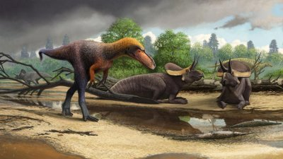 Miniature relative of T. rex identified by paleontologists in New Mexico