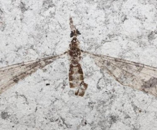 Scientists find natural pigment in 54-million-year-old insect eyes