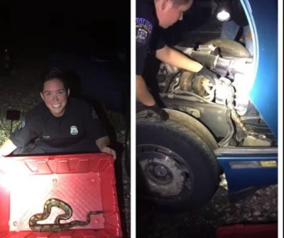 Michigan police officer pulls python out of car engine