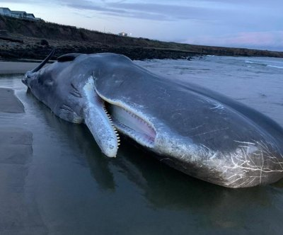 Sperm whale dies after beaching in Britain