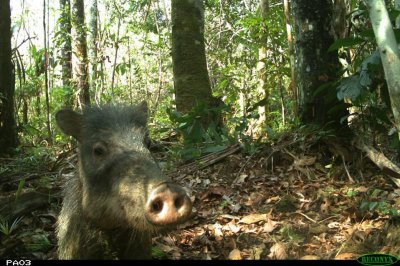 Field Museum shares animal selfies captured in the Amazon