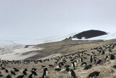 Scientists program robot swarm to count penguins