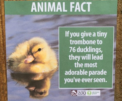Comedian posts fake animal fact signs at LA zoo