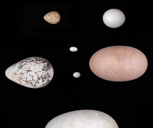 Adaptations for flight may explain egg-shape variety among birds