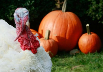 Thanksgiving turkey prices go up
