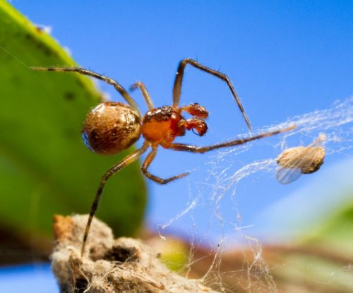Temperature drives divergent personalities among tangle web spiders