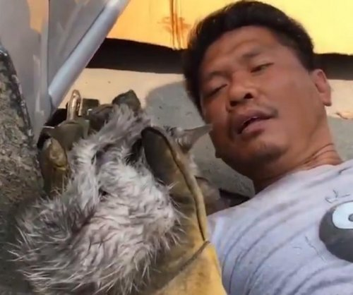 Man crawls under truck to rescue kitten from engine compartment